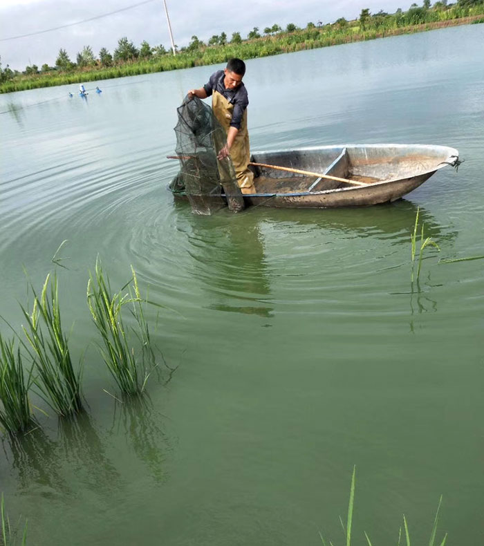 上海虾捕捞