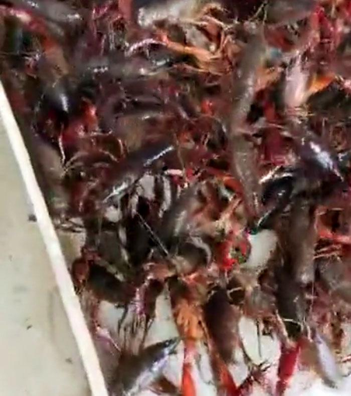 上海小龙虾